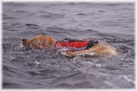 20170320泳ぐFiore(1).JPG