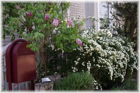 20170430春の庭(1).JPG